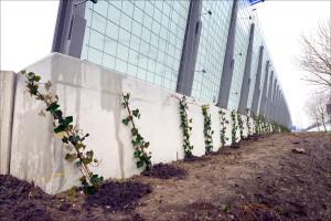 Geluidscherm beplanting 012014