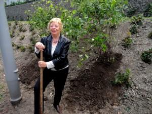 Mevrouw Leenders plantte 2 krentenstruiken